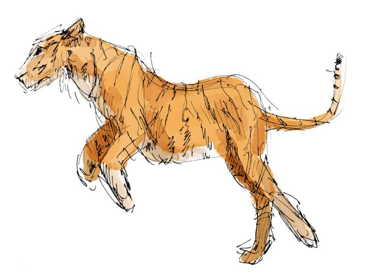 Tiger copy