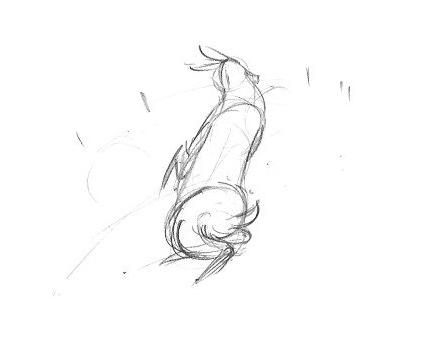 deer0015