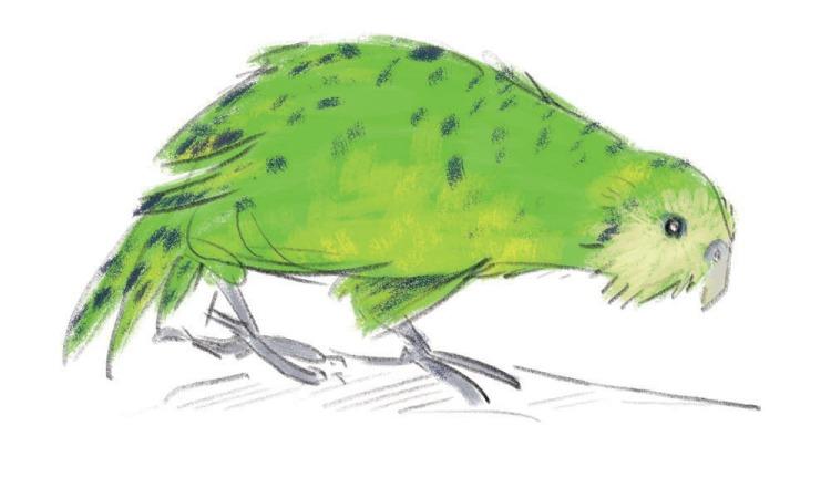 kakaposmall