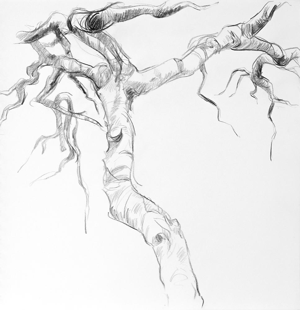 Tree_03