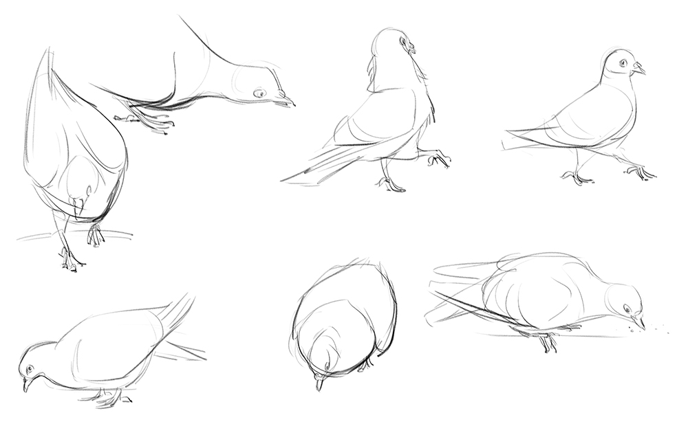 PigeonSketches02